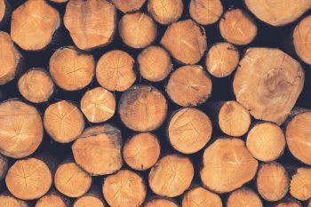 Những chất liệu gỗ phổ biến dành chonhà gỗ hiện đại